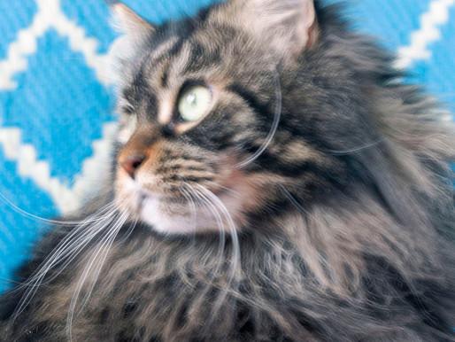 il gatto su instagram non è una cosa seria - figuriamoci sul sito