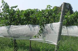 Panel Netting
