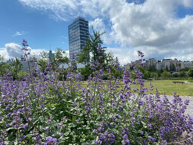 Herrgårdsparken, lila blommor, Kista torn