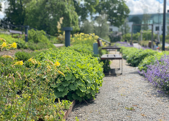 Gula blommor i Herrgårdsparken, Kista