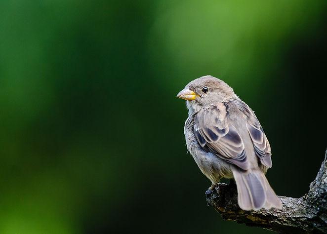 Fågel på grön bakgrund
