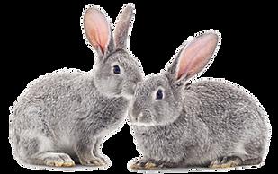 Pet bunnies.png