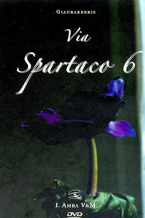 Via Spartaco 6 video