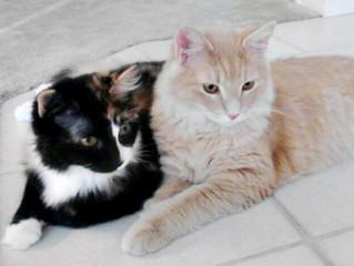 Adopted 2 Kitties!