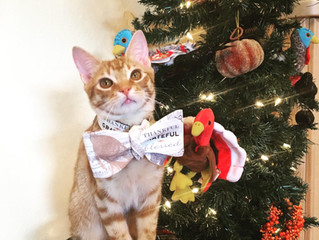 Adopted Cats - Holiday Edition