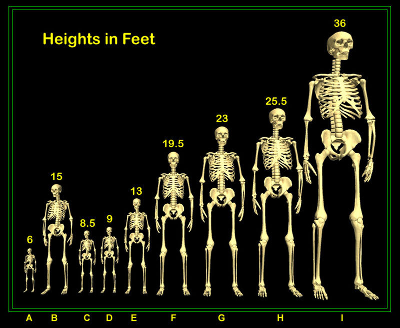 Height Chart of the Giants