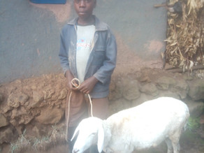 Animal Husbandry Testimony: Justus