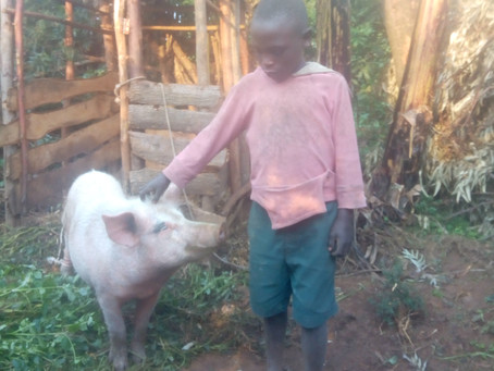 Animal Husbandry Testimony: Delick