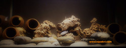 Kenyi Cichlid Aquarium
