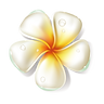 —Pngtree—flower_can_be_used_for_4082
