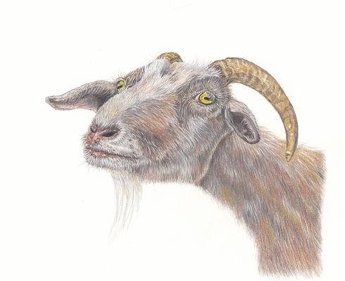 Goat original.jpg
