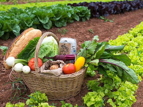 CSA basket Community Supported Agriculture Organic Farm Farming Field