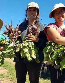 harvesting beets 2.jpg