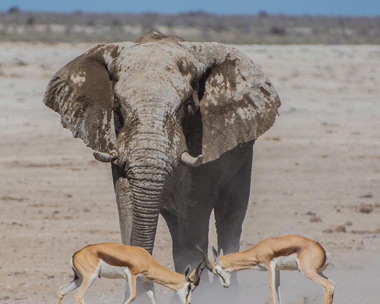 elephant with gazelles