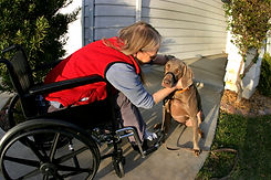 lady in wheelchair with dog purchased ph