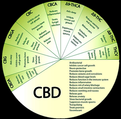 cbd wheel_edited.png