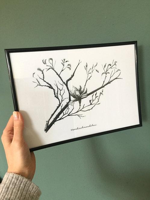 Magnolia - Poster A4