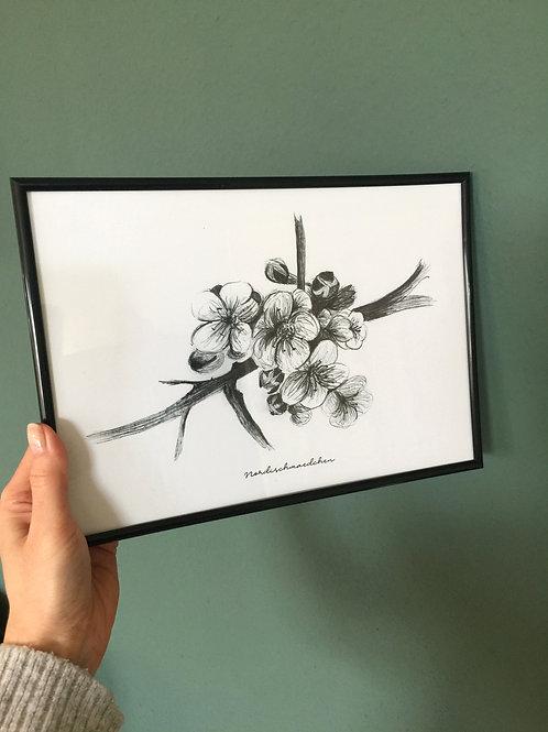 Kirschblüten - Poster A4