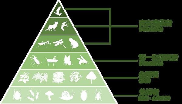 生態系ピラミッド.png