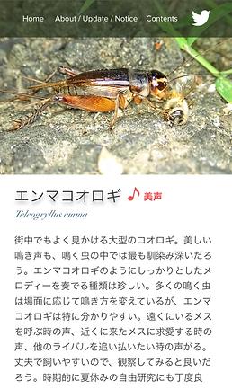 サイトの見かた_MB3.png