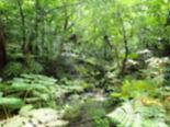 熱帯雨林.jpg