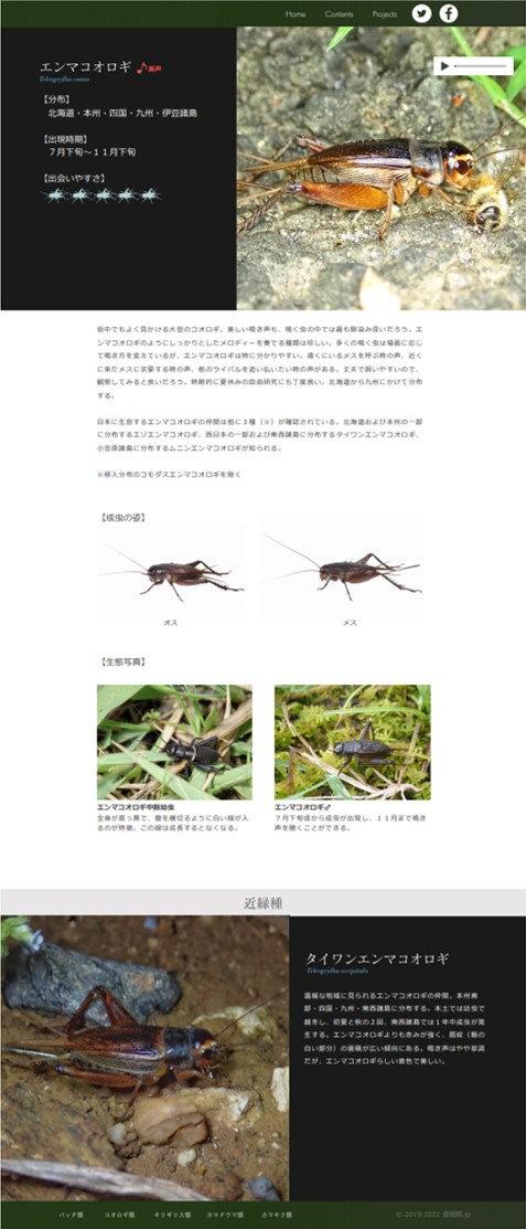 エンマコオロギ_PC.jpg