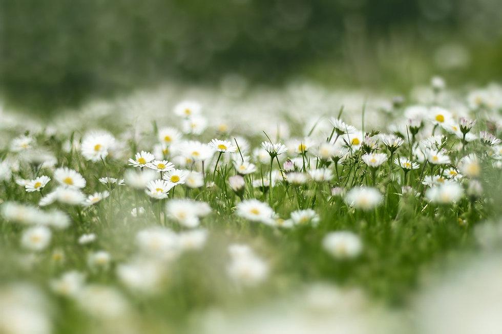 flower-meadow-4999277_1920.jpg