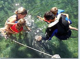 swim-with-manatees-tour.jpg