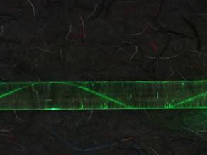 Tipos de Fibra Óptica