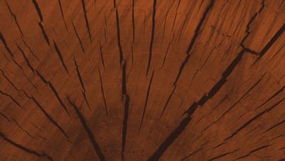 Bild Holz