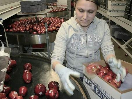Pod bičem mafie, aneb život bulharských pracujících v Česku