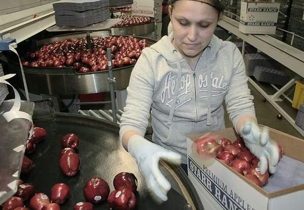 Bulharští pracující v ČR