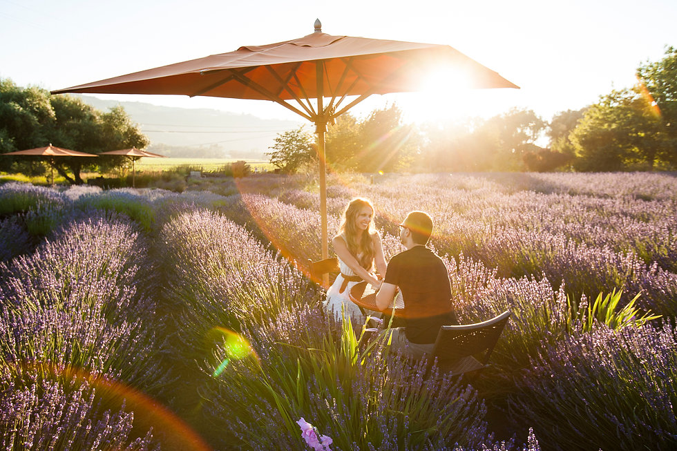 Engagement in a lavender field, sonoma county