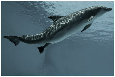 breaking news: glasgow dolphin