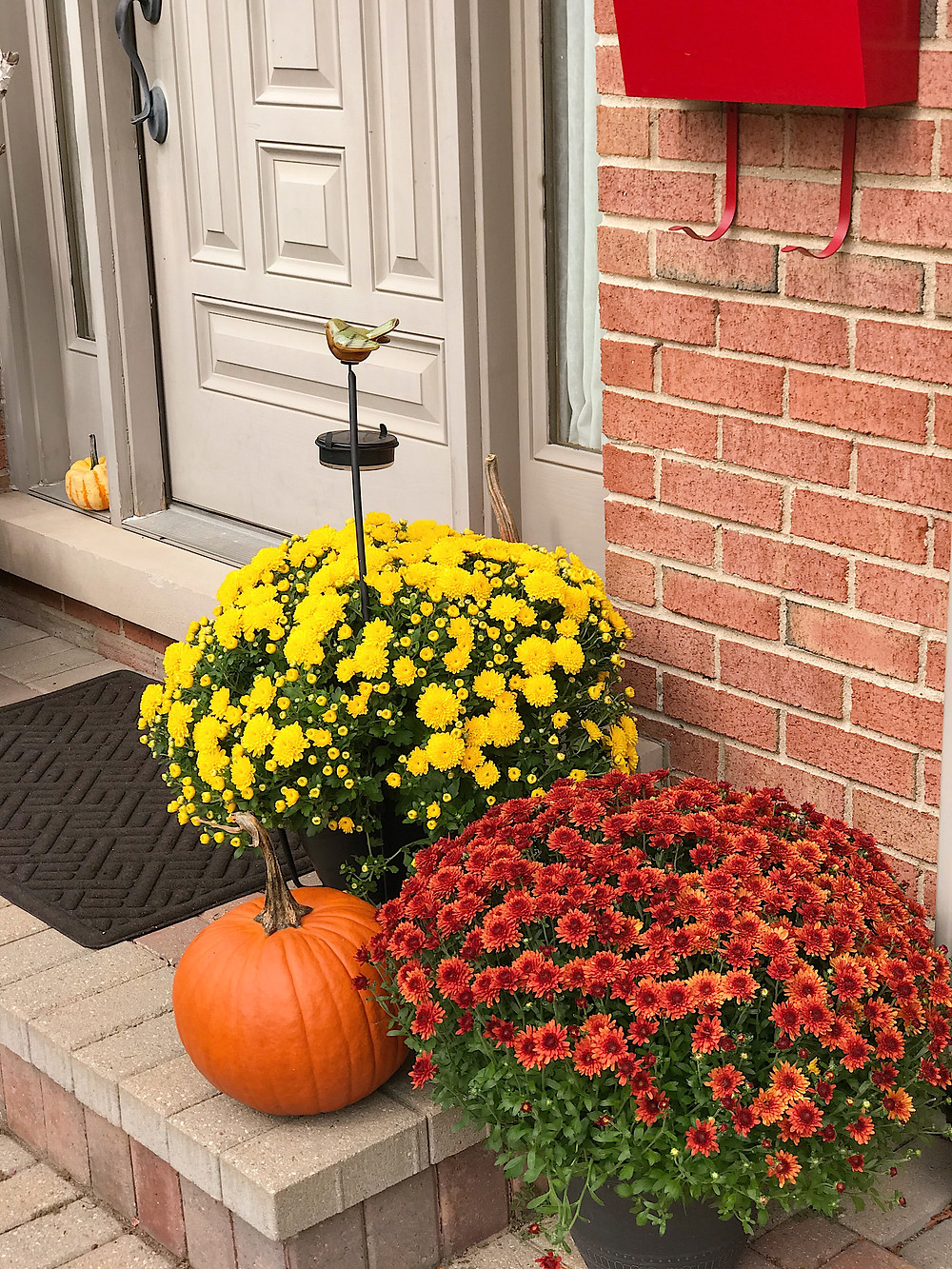 doorway decorated with fall mums and pumpkins