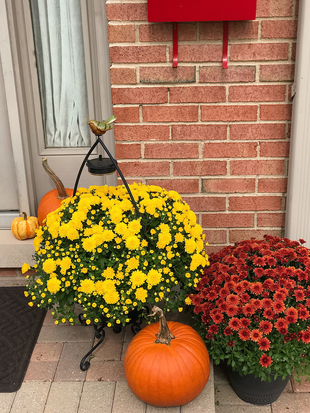 arrangement of mums and pumpkins