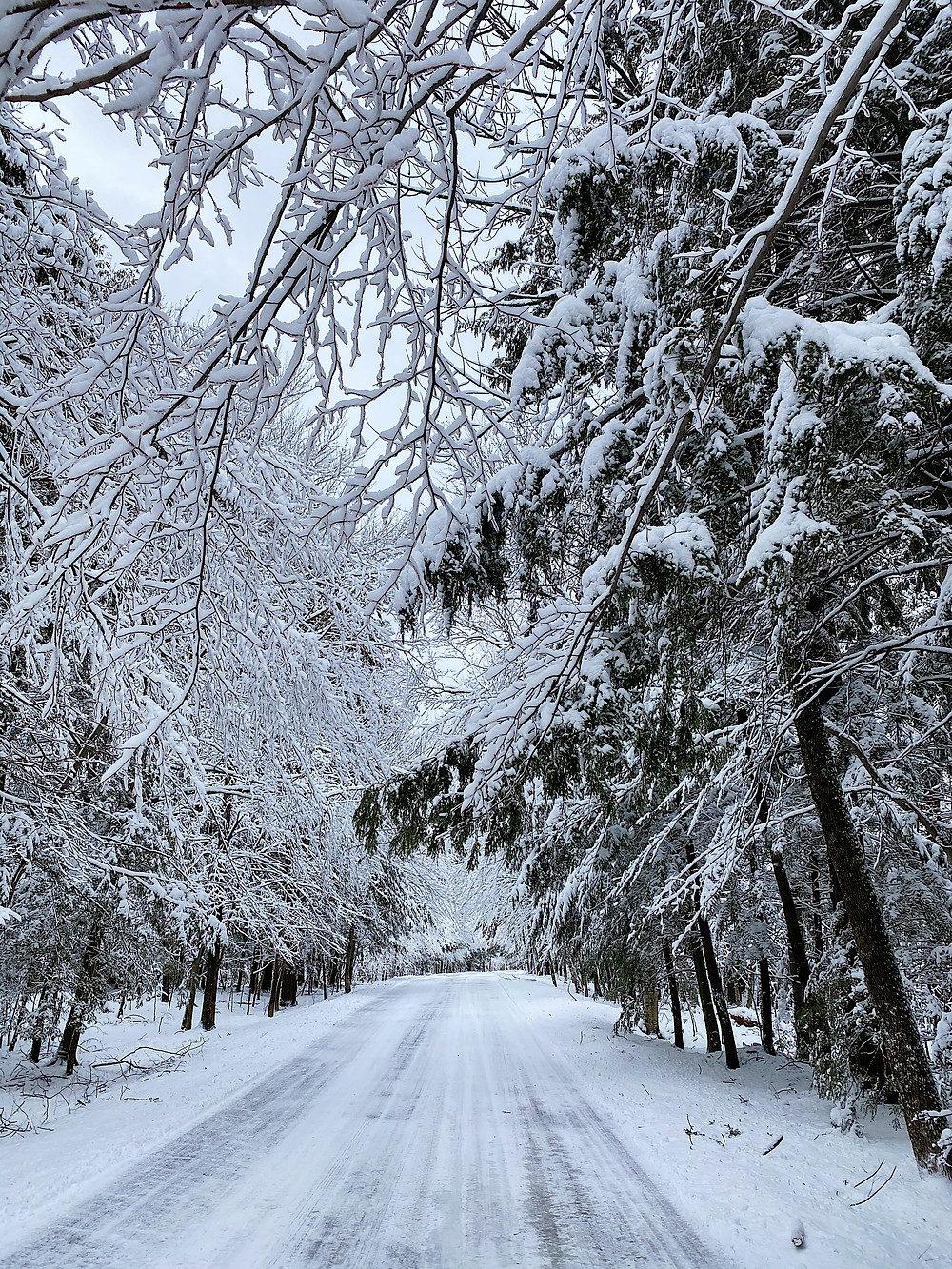 road through a snow covered forest