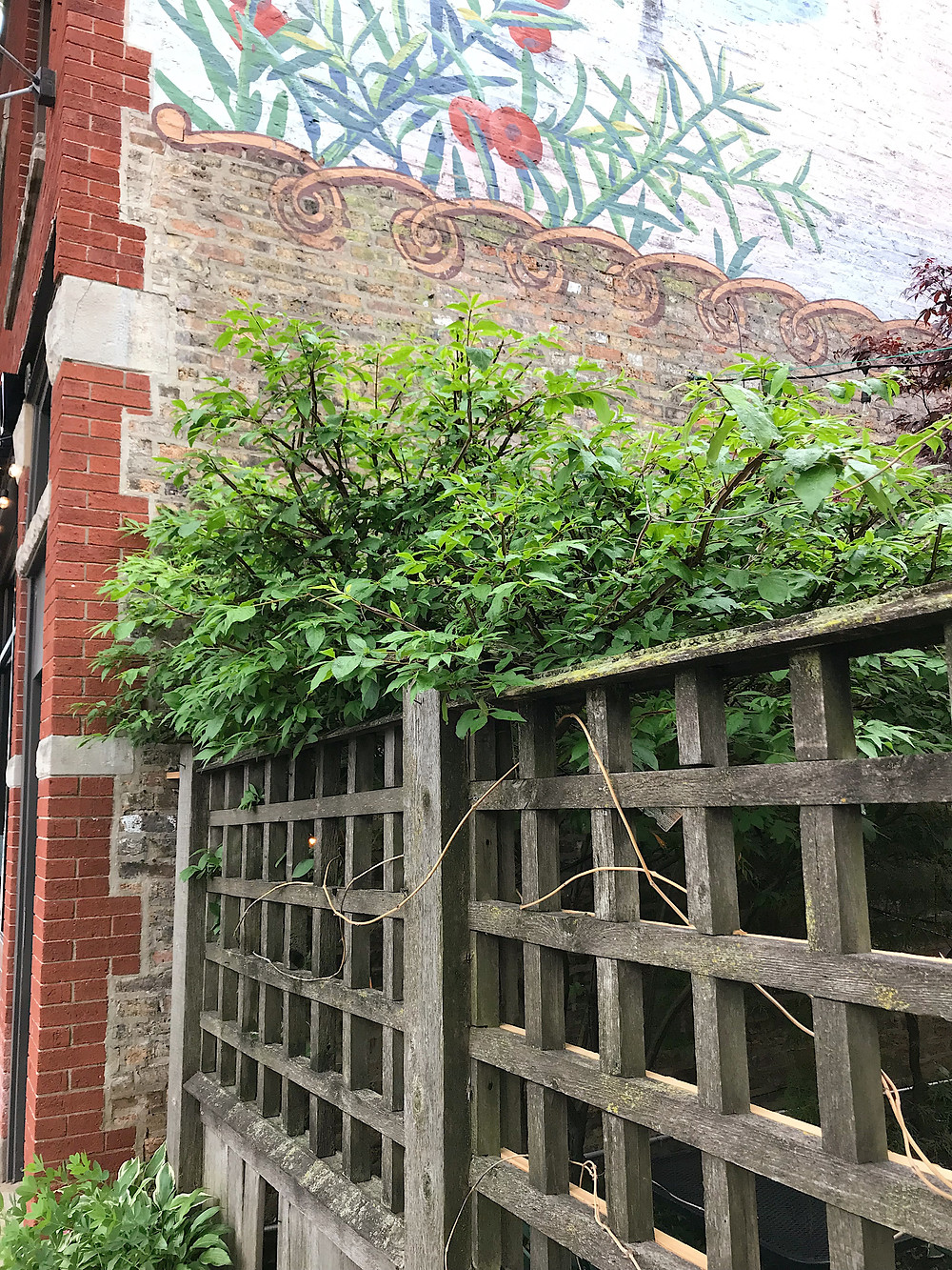 fence with greenery