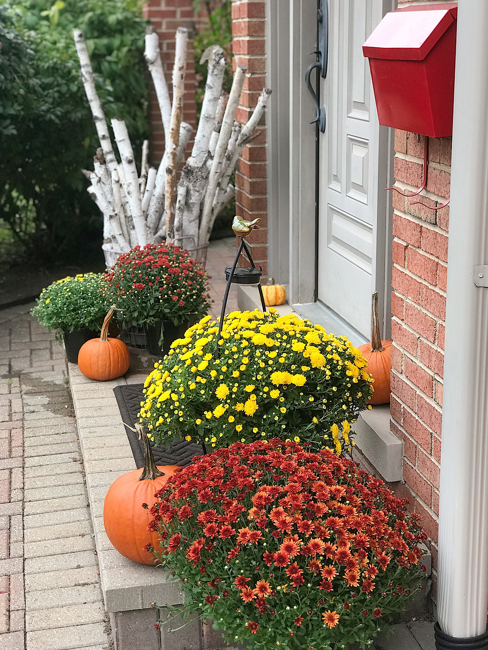 front doorway decorated with fall mums and pumpkins