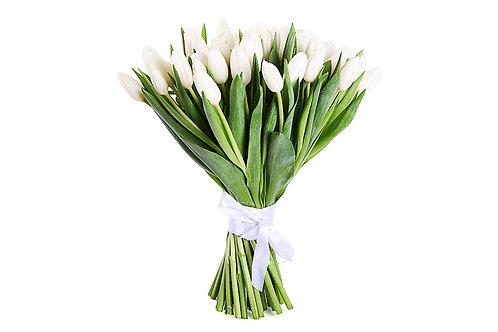 "51 Белый тюльпан ""Весна на Аляске"""