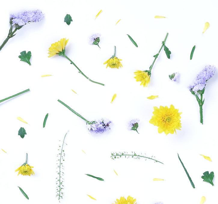 Yellow and Purple Flowers_edited_edited.jpg