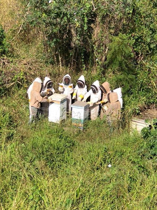 educating the future beekeepers how to h