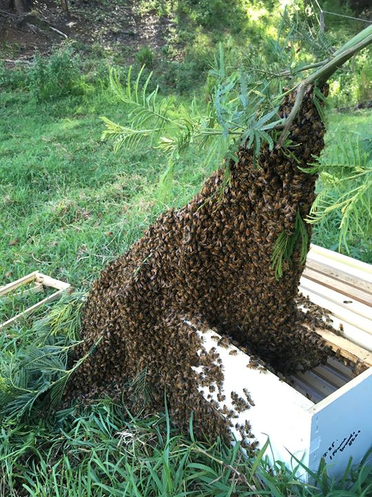 Swarm _