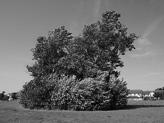 Dublin Biosphere Portmarnock