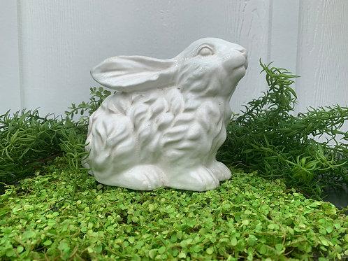 Small White Bunny