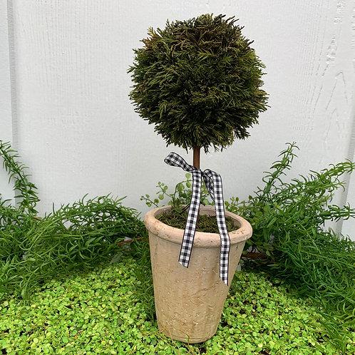 Medium Cypress Topiary