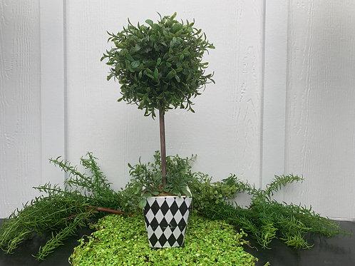 Smaller Harlequin Topiary