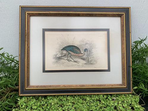 Bird Print