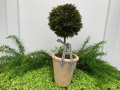 Large Cypress Topiary