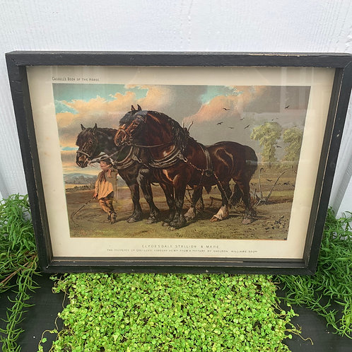 Two Horse Print